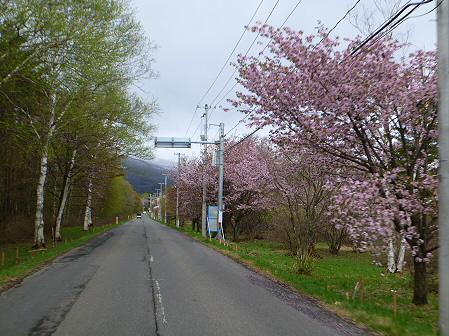 明治百年記念公園の桜06(2012.5.5)