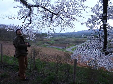 為内の一本桜05(2012.5.5)