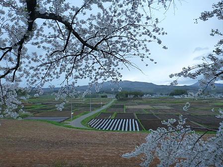 為内の一本桜07(2012.5.5)