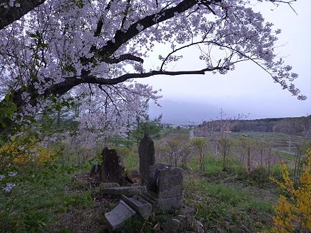 為内の一本桜08(2012.5.5)