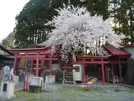 伊那々伊澤神社の桜01(2012.5.7)
