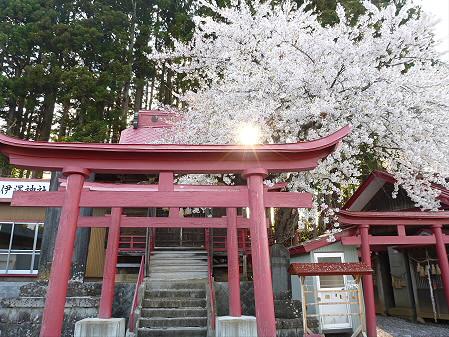 伊那々伊澤神社の桜02(2012.5.7)