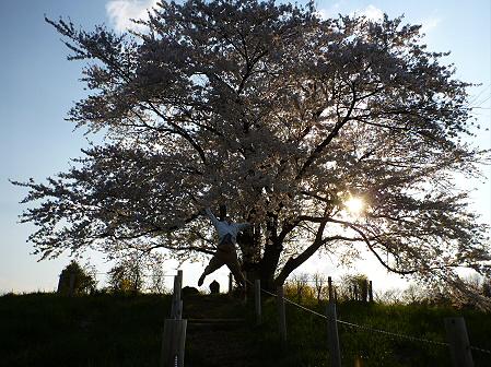 為内の一本桜12(2012.5.7)
