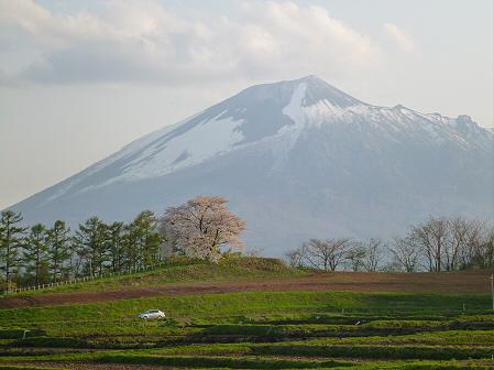 為内の一本桜23(2012.5.7)