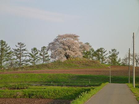 為内の一本桜25(2012.5.7)