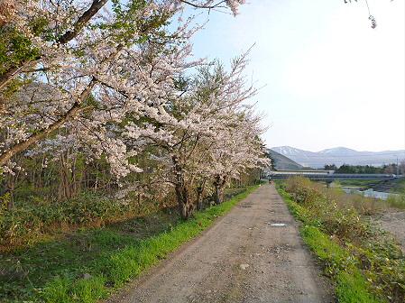 安比川の桜並木05(2012.5.7)