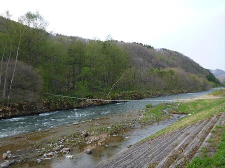 安比川の桜並木15(2012.5.7)