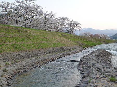 安比川の桜並木23(2012.5.7)
