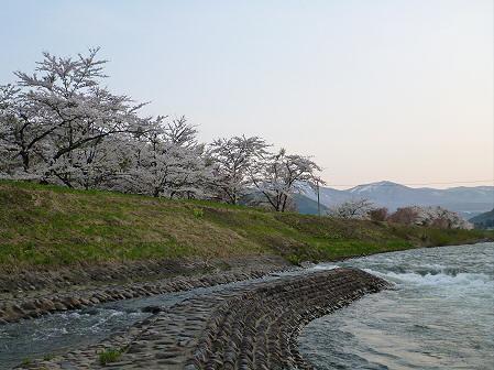 安比川の桜並木24(2012.5.7)