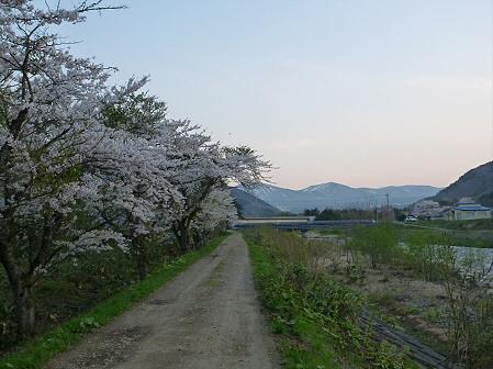 安比川の桜並木29(2012.5.7)