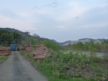 安比川の桜並木31(2012.5.7)