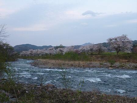 安比川の桜並木33(2012.5.7)