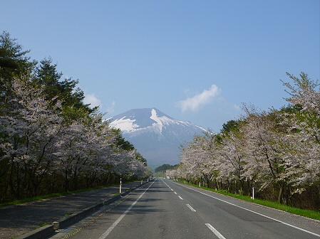 上坊牧野入口付近の桜並木02(2012.5.9)