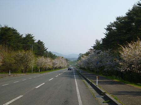上坊牧野入口付近の桜並木03(2012.5.9)