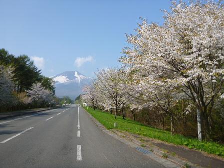 上坊牧野入口付近の桜並木06(2012.5.9)