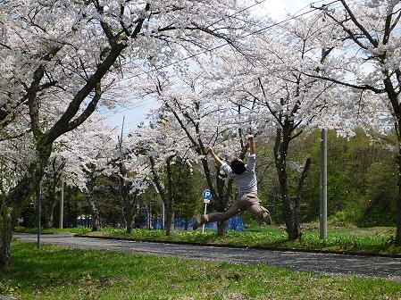 トラウトガーデンの桜並木01(2012.5.9)ジャンプ!