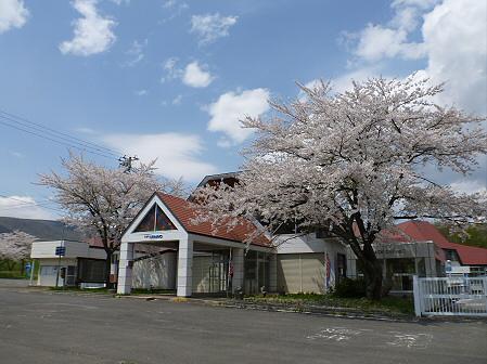 トラウトガーデンの桜並木13(2012.5.9)