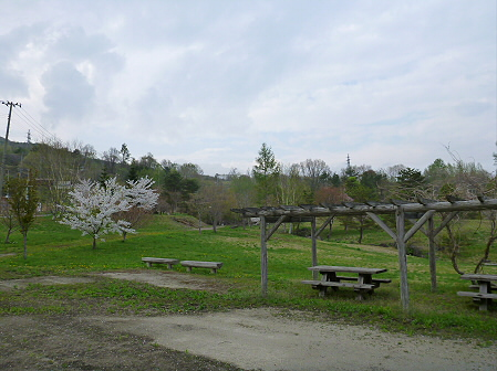 八幡平市さくら公園の桜09(2012.5.9)