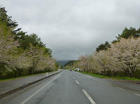 上坊牧野入口付近の桜並木02(2012.5.11)