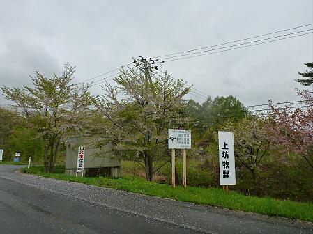 上坊牧野入口付近の桜並木06(2012.5.11)