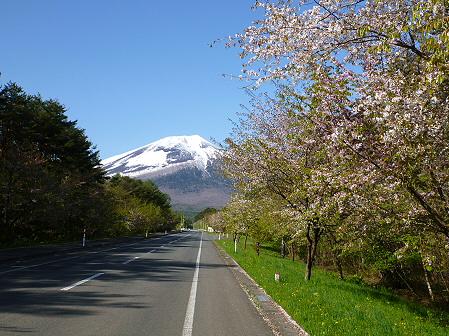 上坊牧野入口付近の桜並木03(2012.5.13)