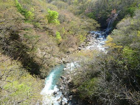 森の大橋05(2012.5.13)