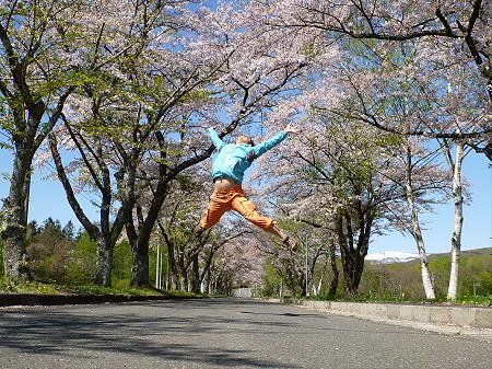 八幡平トラウトガーデンの桜並木01(2012.5.13)ジャンプ!