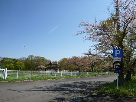 八幡平トラウトガーデンの桜並木17(2012.5.13)