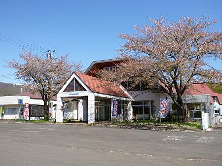 八幡平トラウトガーデンの桜並木18(2012.5.13)
