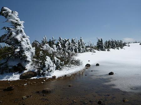 八幡平山頂散策37(2012.5.13)