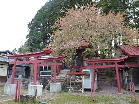伊那々伊澤神社の桜02(2012.5.13)