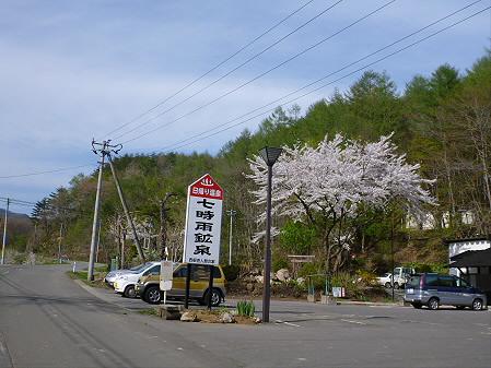 七時雨鉱泉付近の桜07(2012.5.13)