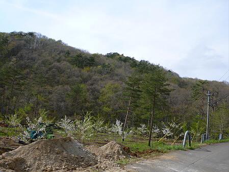 七時雨鉱泉付近の桜08(2012.5.13)