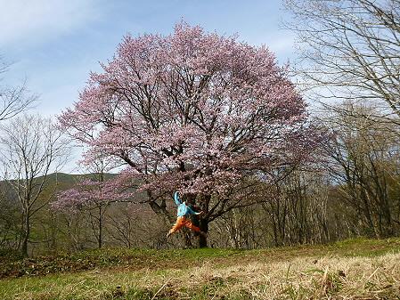 七時雨山の一本桜01(2012.5.13)ジャンプ!
