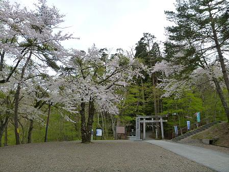 桜松公園の桜03(2012.5.13)