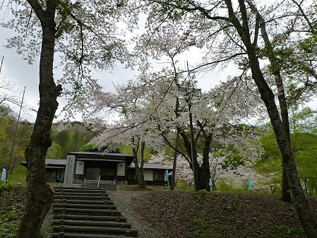 桜松公園の桜05(2012.5.13)