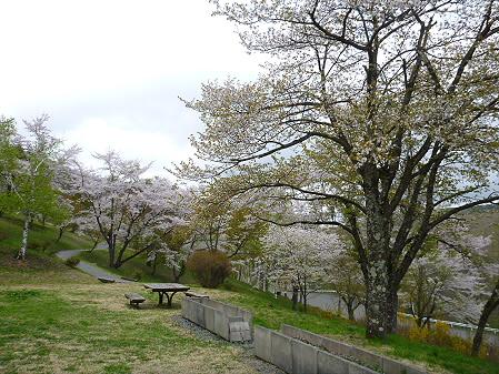 桜松公園の桜07(2012.5.13)