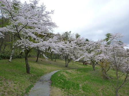 桜松公園の桜09(2012.5.13)