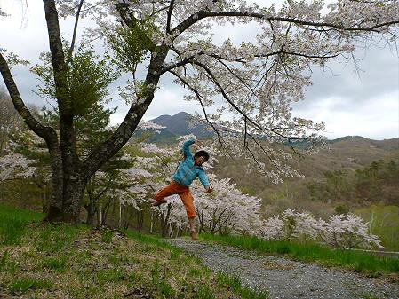 桜松公園の桜01(2012.5.13)ジャンプ!