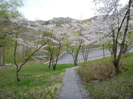 桜松公園の桜13(2012.5.13)