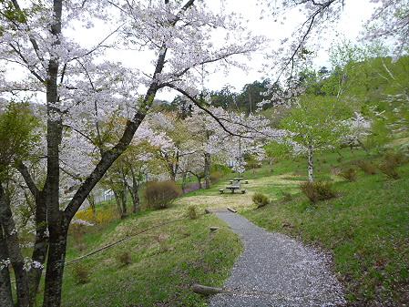 桜松公園の桜16(2012.5.13)