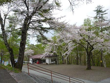 桜松公園の桜17(2012.5.13)