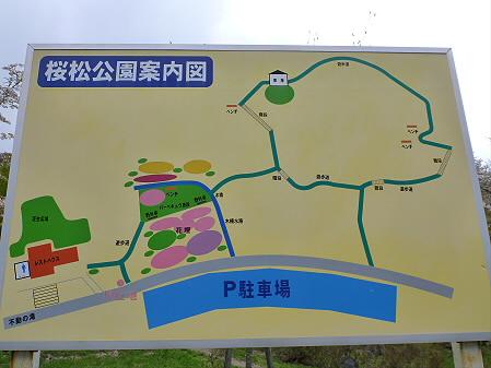 桜松公園の桜18(2012.5.13)