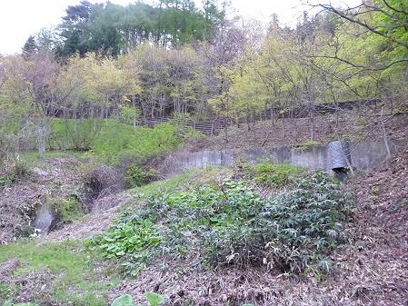 石割桜を探して15(2012.5.13)