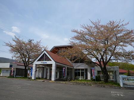 八幡平トラウトガーデンの桜並木07(2012.5.14)
