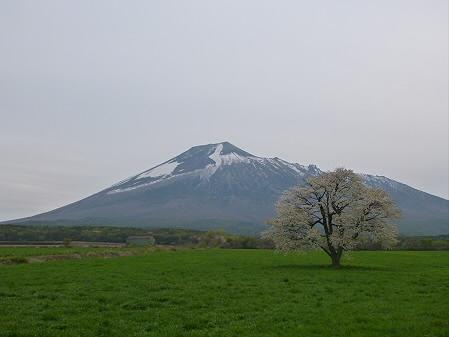 上坊牧野の一本桜01(2012.5.14)
