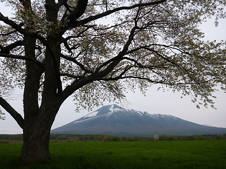 上坊牧野の一本桜05(2012.5.14)