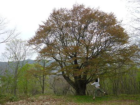 七時雨山の一本桜01(2012.5.19)ジャンプ!
