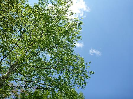 明治百年記念公園04(2012.5.19)