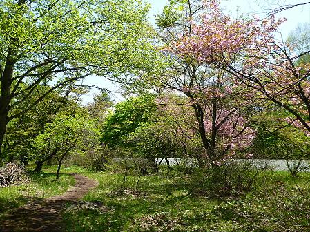 明治百年記念公園22(2012.5.19)